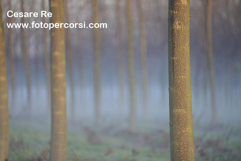 Fotografare alberi_febbraio 2014 (5)