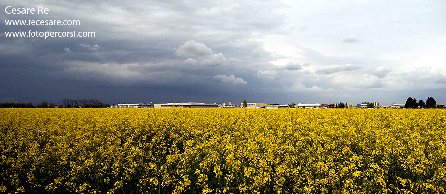Fotografare papaveri, girasoli, colza, risaie e zone agricole ...