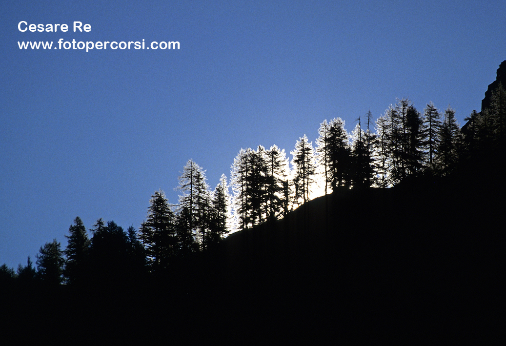 Il sole sorge dietro ad un gruppo di larici. Misurazione spot sul cielo, per rendere gli alberi ancora più scuri. Nikon F90x, Nikkor 300mm f 4, Velvia. Treppiede. Alpe Devero.