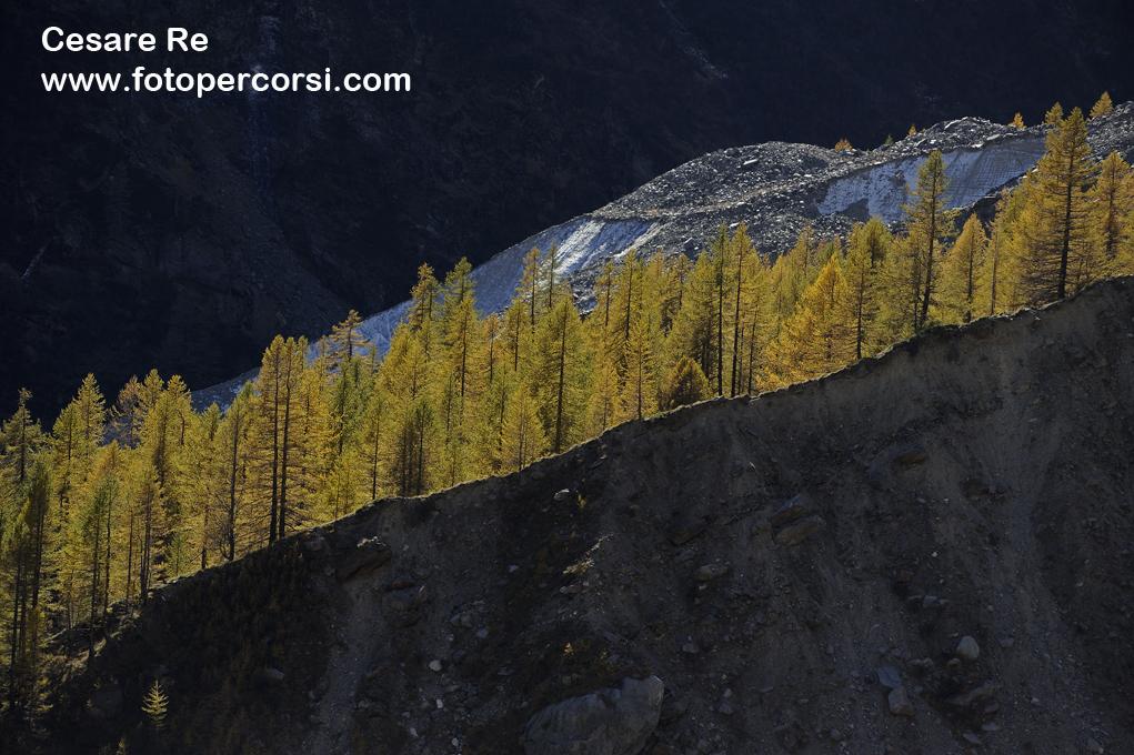 Lama di luce. Un gruppo di larici si erge dalla lingua morenica del Ghiacciaio del Belvedere, a Macugnaga, ai piedi della Est del Monte Rosa. Nikon D800, Nikkor 80-200 2,8, Treppiede.