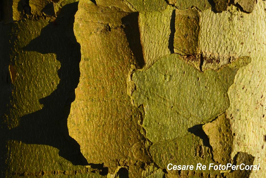 Corteccia. Parco del Ticino. Una texture pura, con il soggetto che occupa tutta l'inquadratura. Nikon D800; Nikkor 60 micro; f 18; 1/100 di secondo; ISO 100; - 0,3 EV. Treppiede