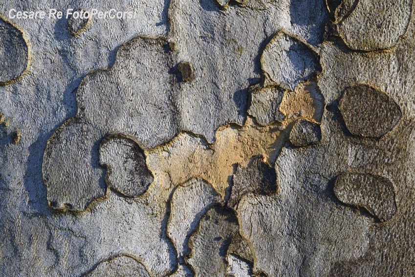 Corteccia. Parco del Ticino. Una texture pura. Nikon D800; Nikkor 60 micro; f 16; 1/160 di secondo; ISO 100; - 0,3 EV. Treppiede