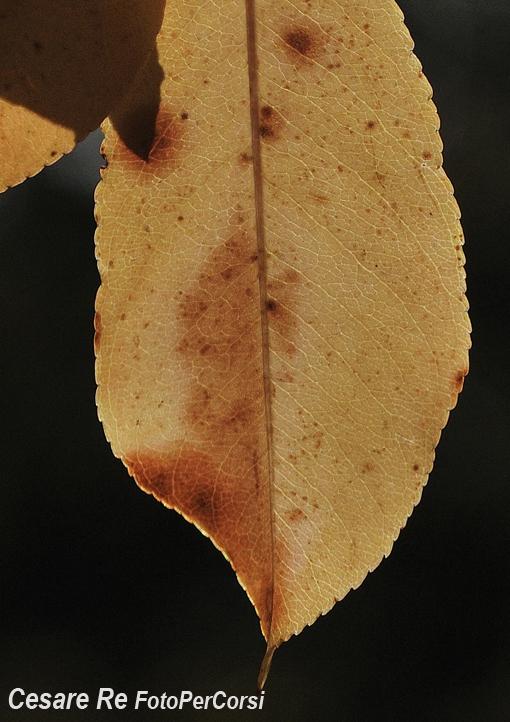 """Anche la """"materia"""" di una foglia è una texture. Misurazione spot sulla foglia, illuminata, e sottoesposizione per rendere lo sfondo più scuro. Nikon F5, Nikkor 80-200 2,8; f 11; 1/60 di secondo, - 0,3 EV; Treppiede."""