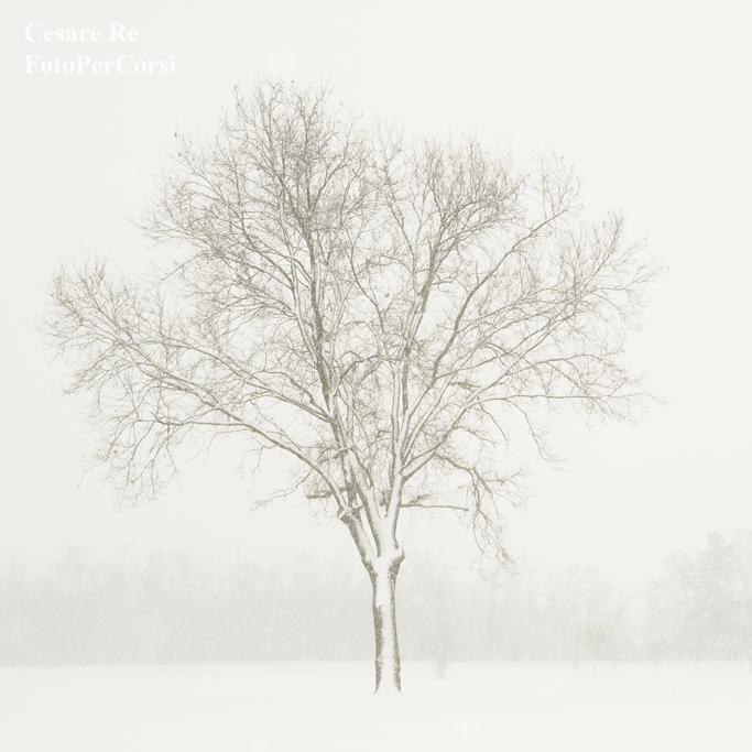 A Casterno, tra nebbia e neve, nel Parco del Ticino. Il formato quadrato consente una composizione lineare, con il soggetto perfettamente in centro. Nikon D800; Nikkor 80 – 200 2,8 AFD; treppiede