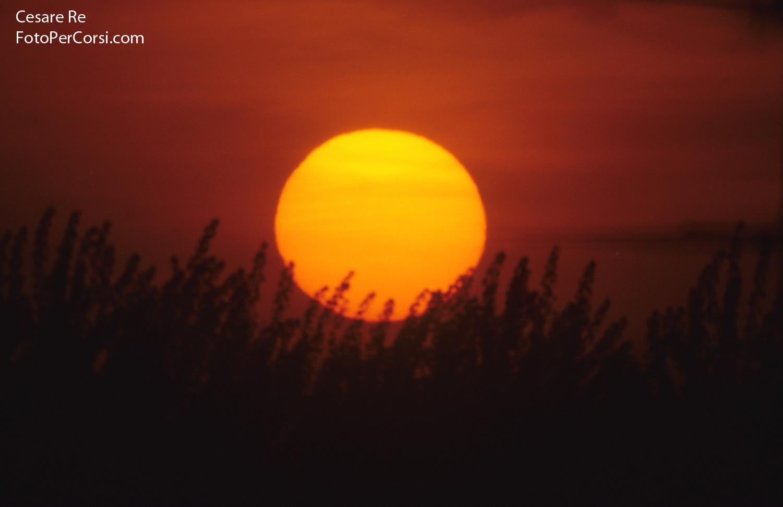 Sole e vegetazione. Nikon F90x; Sigma 600 mm f 8 Catadiottrico. Attenzione quando inquadrate il sole direttamente, se la sua luce è ancora intensa, non solo rischiate di rovinare il sensore, ma anche di provocarvi seri problemi agli occhi. Indispensabile un filtro apposito sull'ottica, o occhiali da saldatore. SCATTO SCONSIGLIATO !