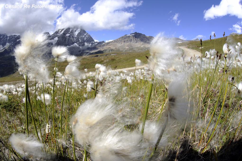 a volte si può sfruttare il vento come elemento creativo, rendendo il mosso dei fiori. Il vento può sporcare il sensore durante il cambio dell'ottica
