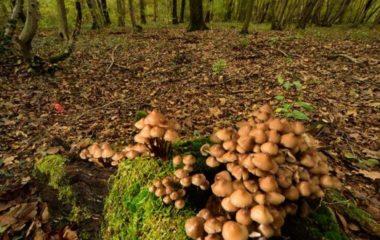 Fotografare i funghi col grandangolo